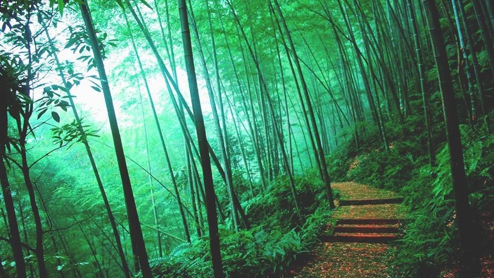 Лощина чёрного бамбука